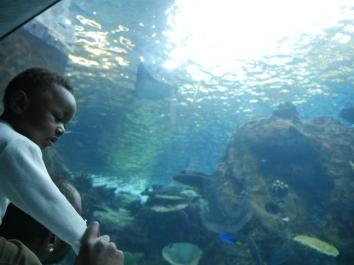 Aquarium-Son&Father1