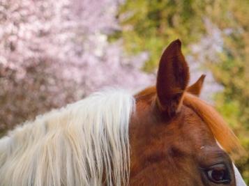 Horses-Eye-Ears