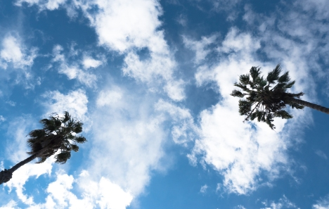 Fromthecar-palmtrees-santamonica