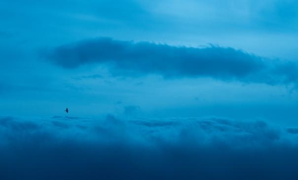 FromthePlane-Sky-Birds