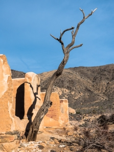 JoshuaTree-BuildingStructure-Tree