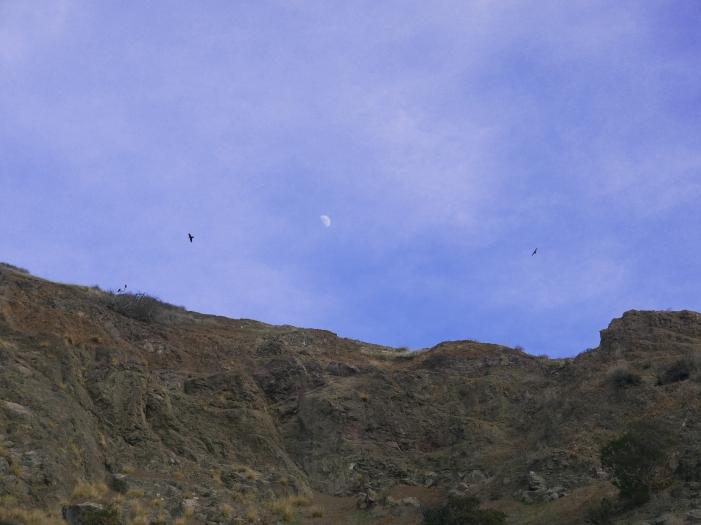 LosAngeles-Moon-Sky-Bird
