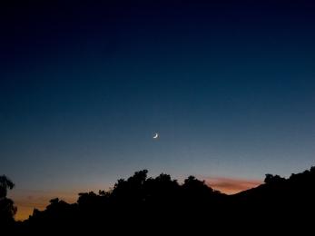 Ojai-Tree-Cresent-Moon