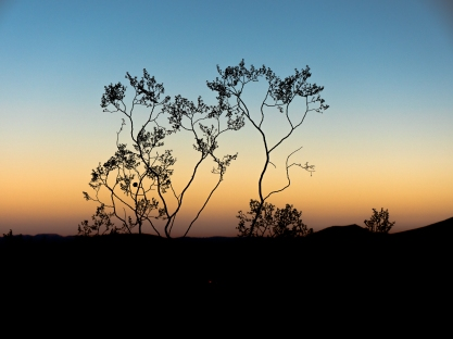RedRocks-Shrub-Sky-Sunset1