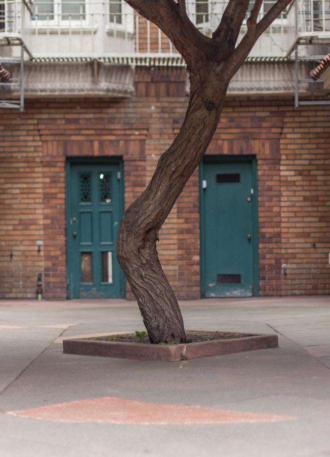 SanFrancisco-Tree-ApartmentBuilding