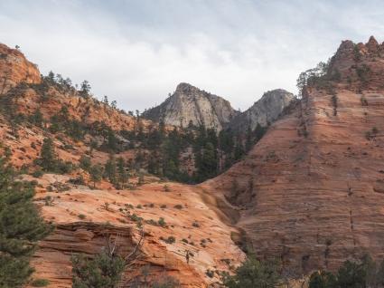 Utah-Zion-MountainGoat-1
